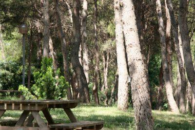 Pinar de El Termet (Vila-real)